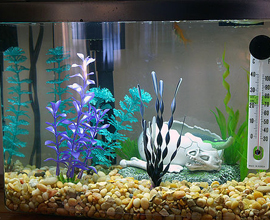 Необходимый тип ламп для аквариума
