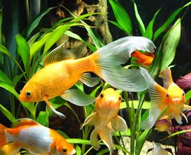 Правильное освещение аквариумов