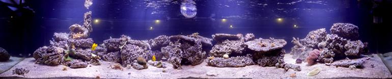 Типы ламп для аквариумов